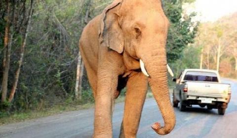 男子云南被大象踩踏身亡 家属可获得赔偿应由谁承担