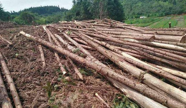 盗伐林木罪和滥伐林木罪有什么区别?
