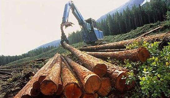 认定盗伐林木罪有哪些注意事项?
