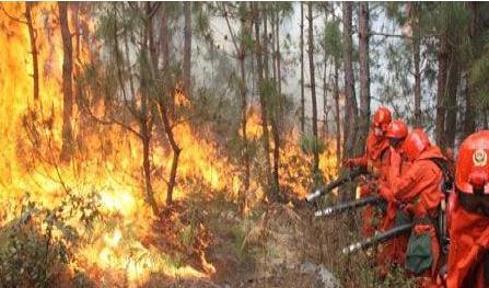 昆明再�l森林火�� 引�l森林火�脑趺炊ㄗ�?