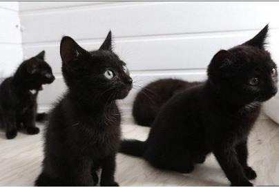 用开水烫怀孕母猫男子被开除 虐待动物构成犯罪吗?