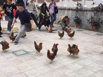 养鸡场丢300多只鸡 小偷是只金毛 多次盗窃会被关多久?