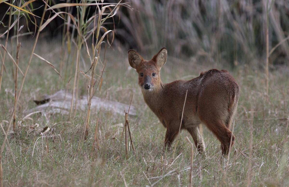 捕杀野生动物怎么判刑?捕杀野生动物从轻处罚的情形有哪些?