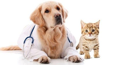 宠物医疗事故如何解决?宠物医疗事故由谁承担责任?