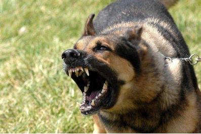 小学生上学途中被狗咬死其父发声 狗咬死人主人会判刑吗?